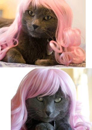 """Don't know if it's true, but the person who pinned this swears it is:  """"I swear to you they are now selling kitty wigs- don't believe me?  google it."""": Wigs Galleries, Gifts Ideas, Pet, New Hair, Cat Wigs, Kitty Wigs, Bizarre Gifts, Hair Style, Cat Wear"""