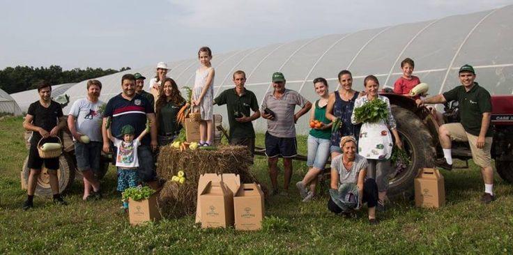 PlatFerma | Coș cu legume Heritage Farms, legume românești din Județul Bihor | http://platferma.ro
