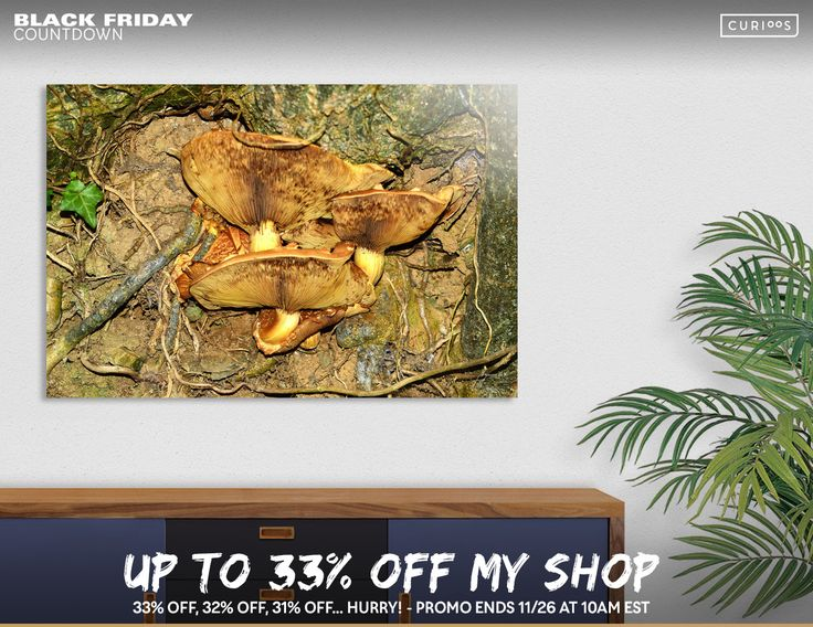 Discover «Toadstool Lamella Ribs», Numbered Edition Aluminum Print by Bryan WB - From $59 - Curioos