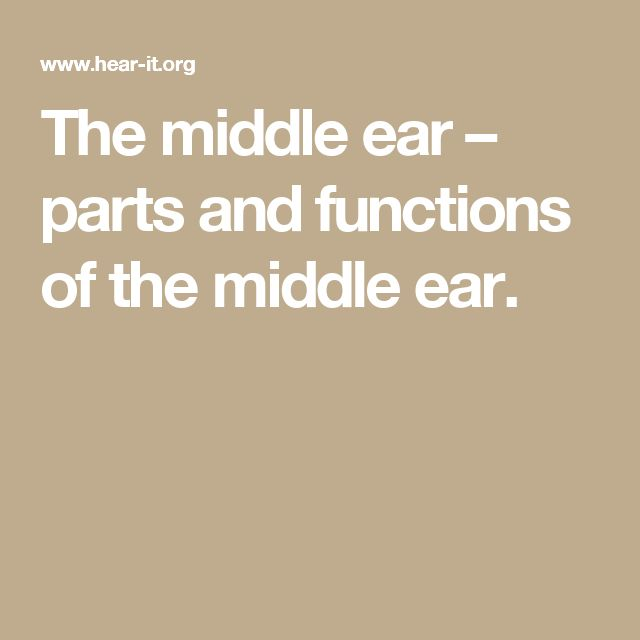 The middle ear – parts and functions of the middle ear.