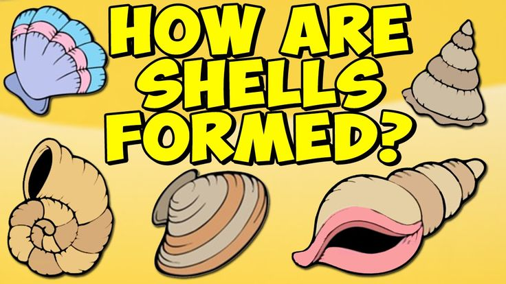 All the Magic in the World. How Are Shells Formed? Simple 2min cartoon. Little Footprints.