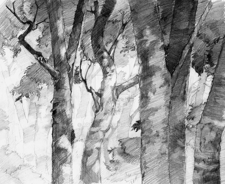 Forest - pencil by art-ori.deviantart.com on @DeviantArt