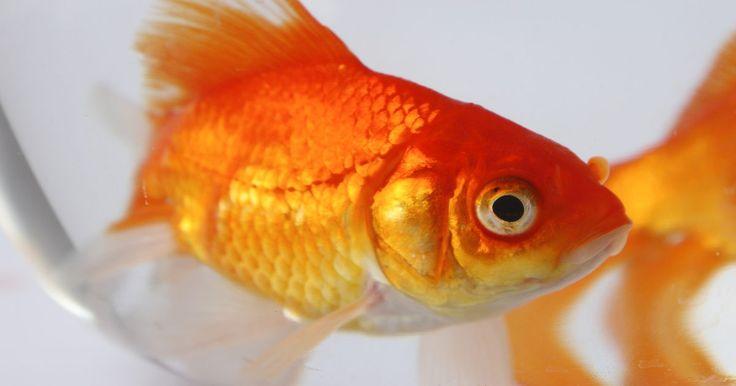 ¿Cuáles son los peces adecuados para un acuario de principiantes?. Elige una especie de pez para tu tipo de acuario, ya sea de agua dulce, exótico o tropical. El tipo de acuario más fácil de manejar para empezar es el de agua dulce, ya que es menos costoso y requiere menos mantenimiento. Los acuarios de agua dulce proporcionan un hábitat para peces de agua dulce y tropicales. El mejor pez para comenzar un acuario ...