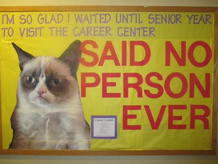 career services bulletin boards | Grumpy Cat-themed Career Center board!