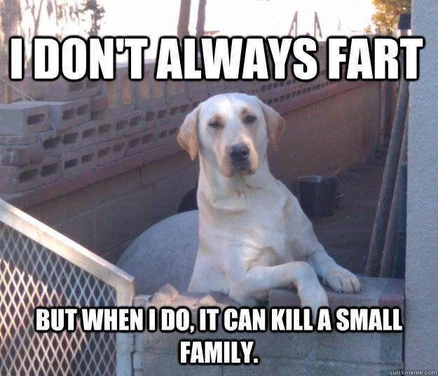 Large Dog Meme 1 Cute Animal Memes Funny Animal Memes Funny Animal Jokes