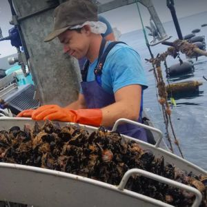 First US offshore mussel farm harvests inaugural batch https://www.undercurrentnews.com/2017/07/19/first-us-offshore-mussel-farm-harvests-inaugural-batch/?utm_source=contentstudio&utm_medium=referral BackOfficeServices Outsource