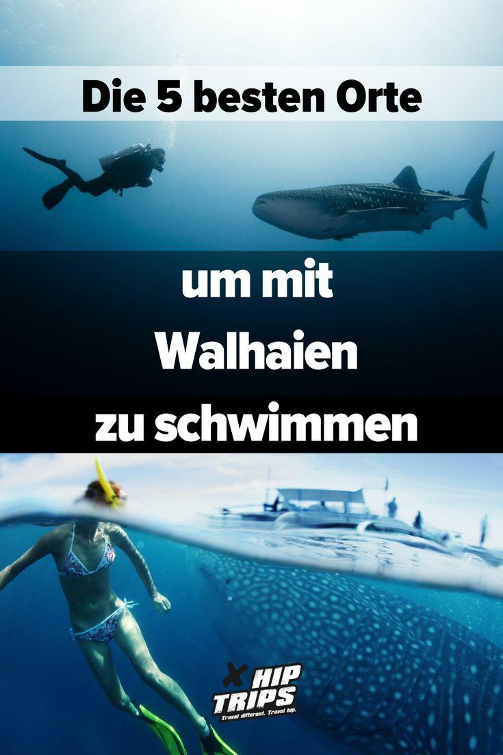 Die 5 besten Orte, um mit Walhaien zu schwimmen | Tauchen | Urlaub | Reisen | Meer
