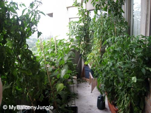 Tips and advice for growing veggies and fruits in containers