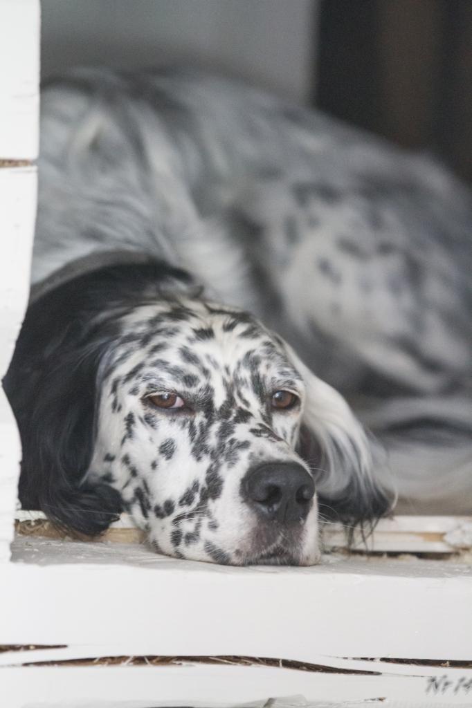 Hyttas gang – integrert plass til hund   Nr14