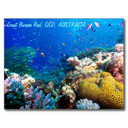 This beautiful postcard shows the awesome colors of the fish and coral on Australia's Great Barrier Reef. #fish #coral #tropical fish #reef #scuba #animals #marine #postcard #diving #australia
