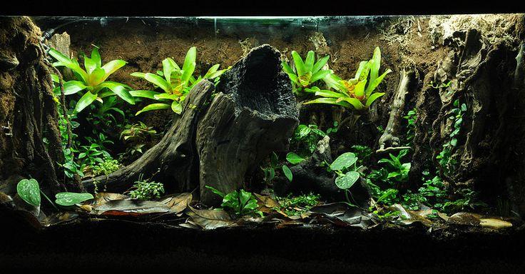 54 Best Other Ariums Vivariums Paludariums Ripariums