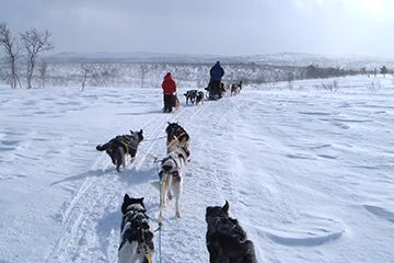 Dogsledding in Alta, Norway