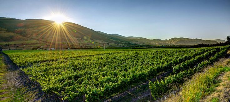 Bartier Bros. wines represent unique and precious Okanagan Valley attributes | Georgia Straight Vancouver's News & Entertainment Weekly