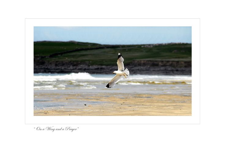 On A Wing And A Prayer by Jessica Priddy on ArtClick.ie