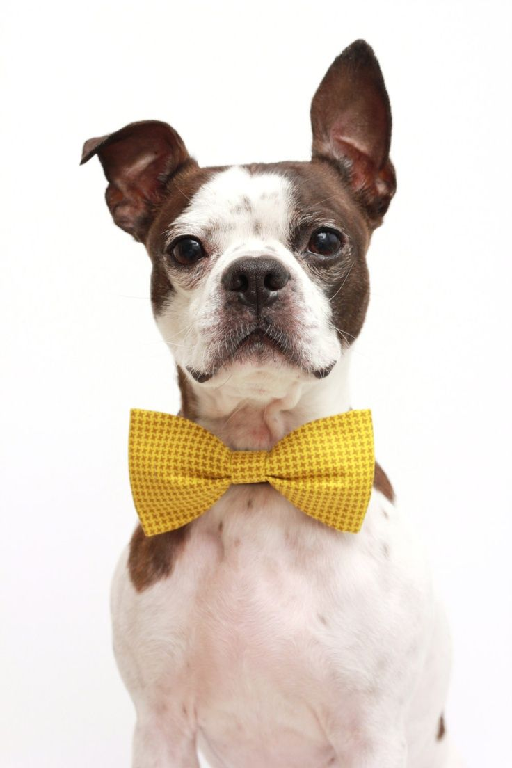 Best 25 dog flower girls ideas on pinterest dog wedding dog wedding dog dog ring bearer dog flower girl ombrellifo Image collections