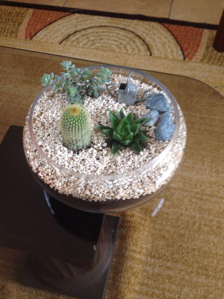Terrariums base de vidrio piedra blanca con cactus y - Decoracion con piedra ...