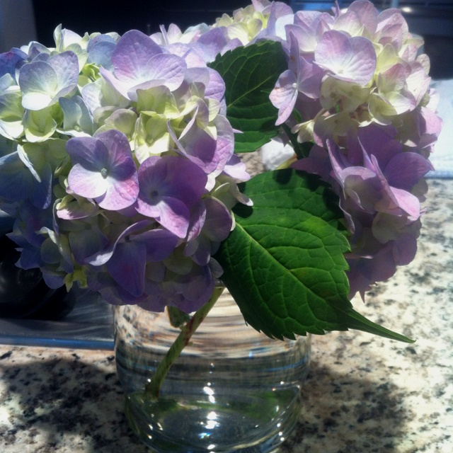 My favorite flower :) these just picked from the garden :)