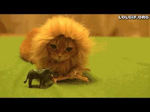 FUNNY CAT CLIPS FUNNY CATS COMPILATION WIL MAKE YOU PEE IN THE PANTS -  #animals #animal #pet #cat #cats #cute #pets #animales #tagsforlikes #catlover #funnycats  Learn how to speak cat! Click HERE for the cat bible! funny cat clips in the world cute cat video that we make in one video funny cat video that we found in around the world , cat is the best pet for... - #Cats