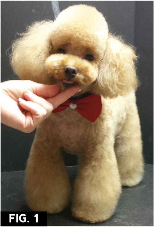 Asian Freestyle | Groomer to Groomer – Pet Grooming News, Stories, and Videos