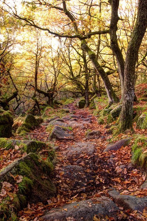 Forest Trail, Derbyshire, England photo via vvaste