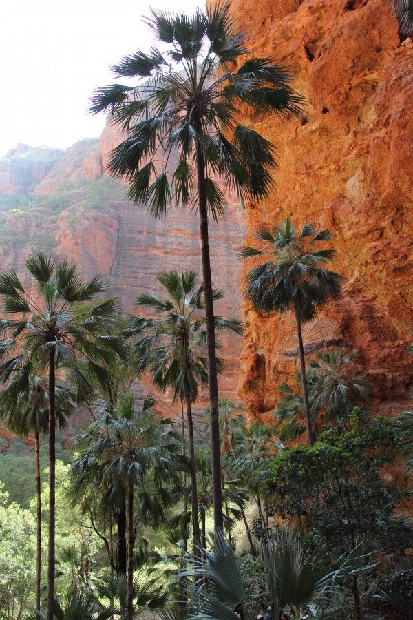 Kimberley walking tour at a glance: walking, camping and 4wd: 13 days experiencing the best of the Gibb River Road, El Questro and Purnululu National Park (the Bungles)
