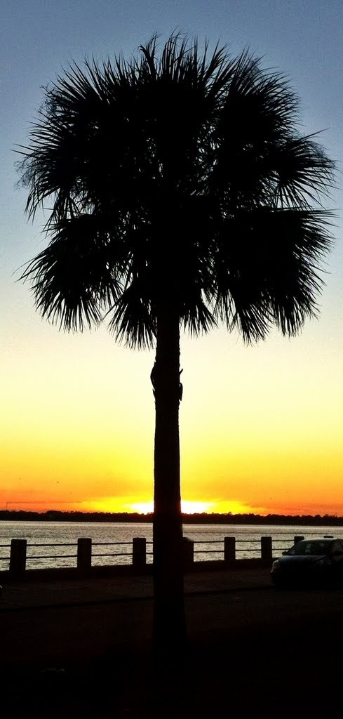 67 Best Images About Palmetto Tree On Pinterest Trees
