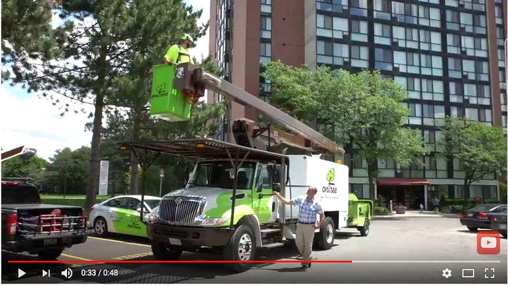 Ontree Onpoint w/ Carson Arthur - Episode #3 - Pruning Care #carsonarthur #hgtv #gta #ontree #treecareservices