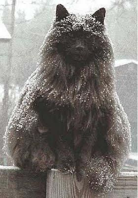 This black, snow-capped cat isn't cute -- he's magnificent (Barn Cat Pictures | Pictures of Cats)