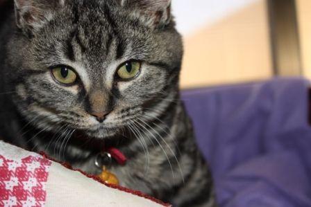 The cutest kitten...