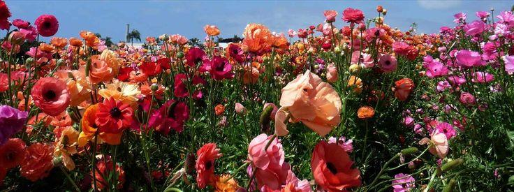 Resultado de imagem para pinterest may flowers