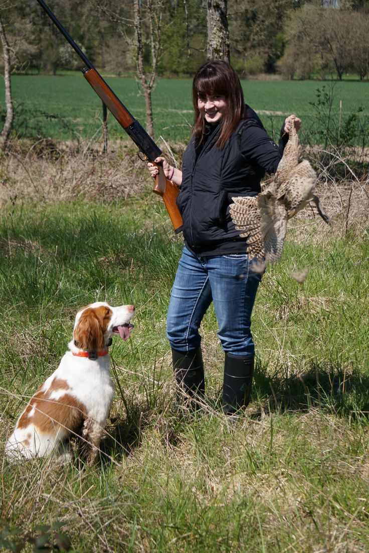 French brittany spaniel hunting