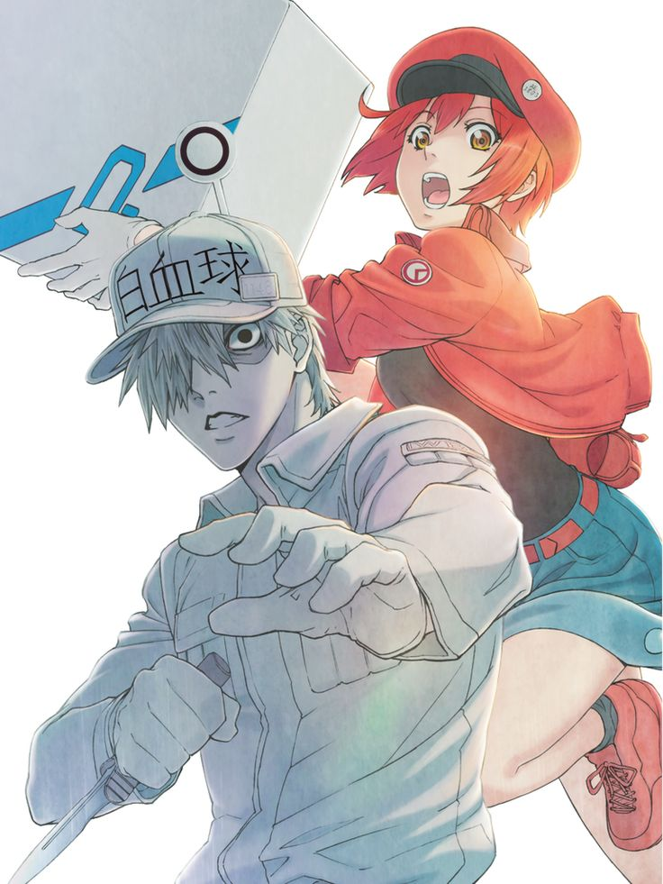 Cells at work complete bluray set anime anime city