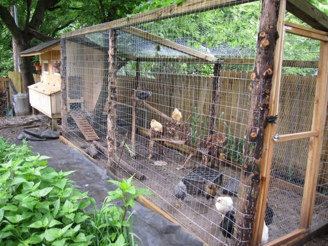 Medium Chicken Coop Design
