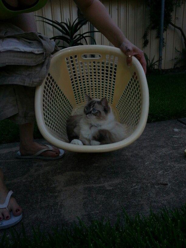 Mums washing basket