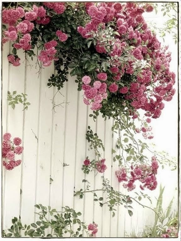 http://judyscottagegarden.blogspot.com/p/roses.html