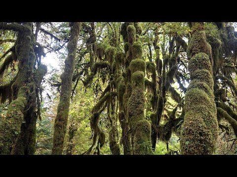 Hoh Rainforest, Olympic NP, Washington, USA in 4K (Ultra HD) - YouTube