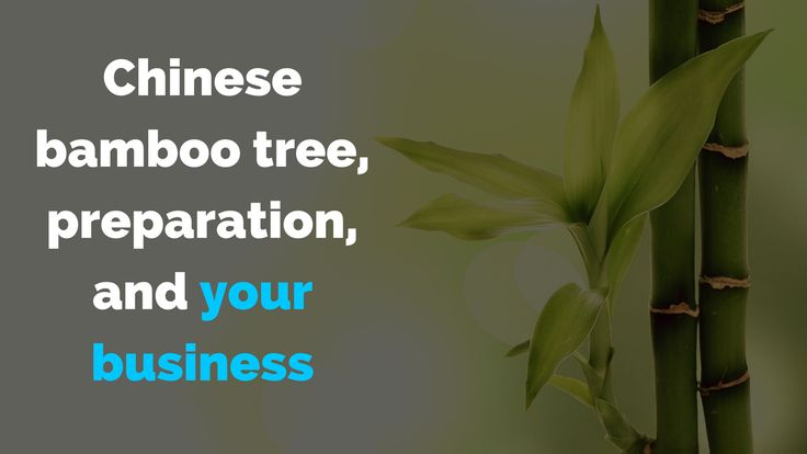 Chinese bamboo tree, preparation and your business -  what do they have in common?   Here's the answer:   => http://brandonline.michaelkidzinski.ws/chinese-bamboo-tree-preparation-and-your-business/