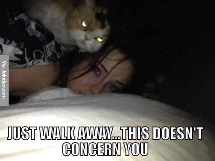 funny cat memes | Funny scary cat meme