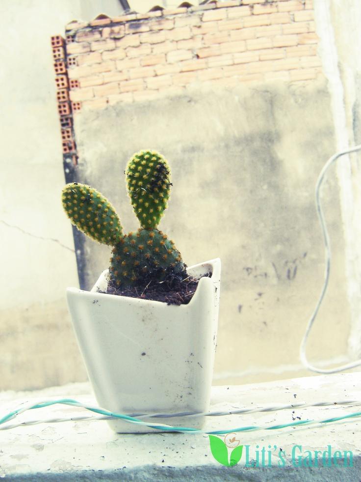 Cactus ^^ ( rabbit ears)