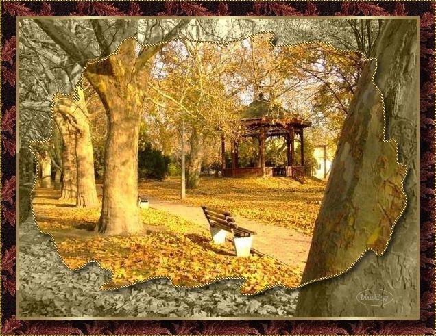 ősz: szinesben