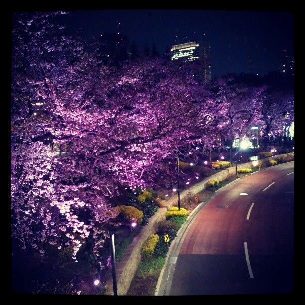 sakura(桜) at Tokyo Midtown