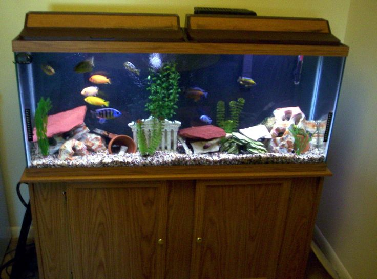 19 best images about aquariums on pinterest aquarium for 50 gallon fish tank dimensions