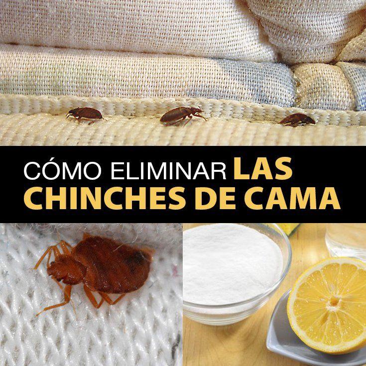 Cómo Eliminar Las Chinches De Cama Rápidamente - La Guía de las Vitaminas