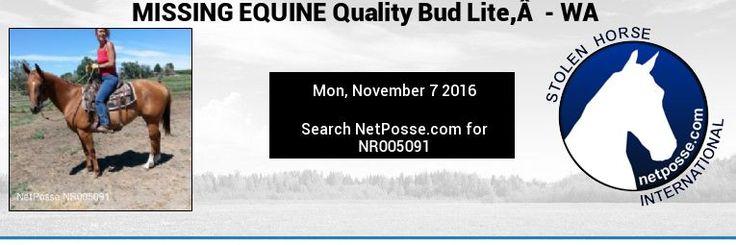 NR005091 MISSING EQUINE Quality Bud Lite, - WA