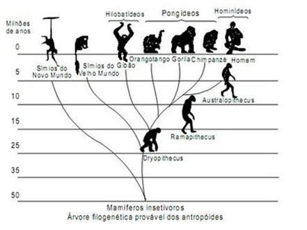 Teoria da Evolução. A Teoria da Evolução Biológica - Brasil Escola