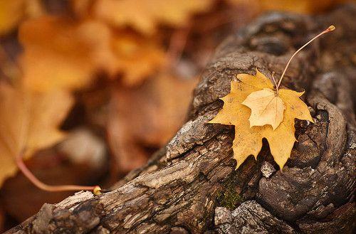 leaves: Fall Colors, Autumn Fall, Hands, Mine, Autumn Colors, Leaves, Photo, Autumn Splendor
