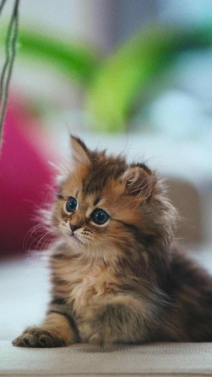 best adorable animals images on pinterest fluffy pets funny