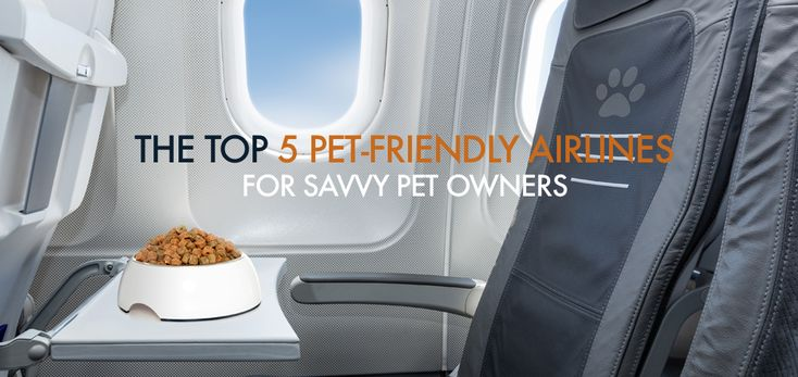 The Top 5 Pet-Friendly Airlines for Savvy Pet Owners | The Get Leashed guide to furry friend first-class treatment.