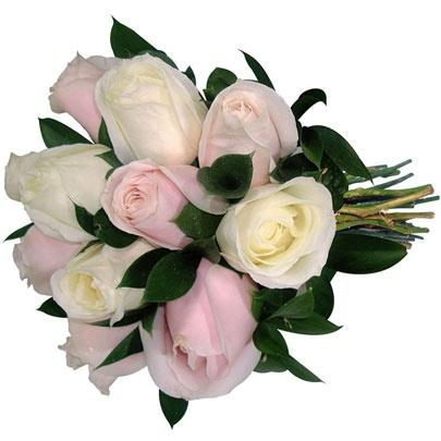 roses: Rose