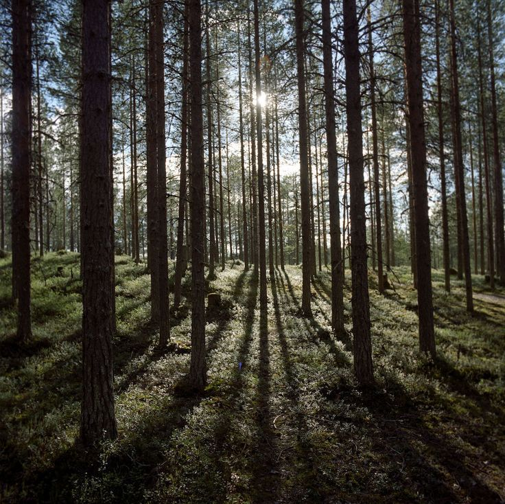 Tutustu Hossaan! Uusi kansallispuisto avataan pian